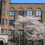 東大のキャンパスと桜